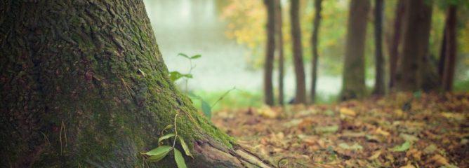 Une forêt cinéraire